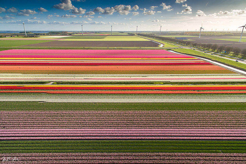 Tulpenroute 2019 van 13 april tot en met 5 mei