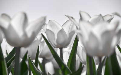 Tulpenroute viert eerste lustrum