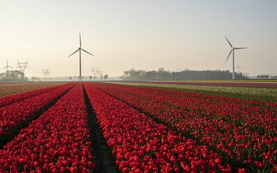 Tulpenroute Flevoland start vanaf 16 april