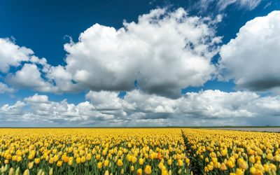 Thema Tulpenroute Flevoland 2019
